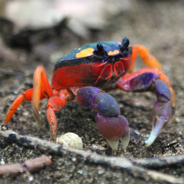Wall Art - Photograph - Mouthless Crab by Nathan Miller