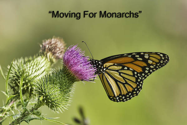 Wall Art - Photograph - Moving For Monarchs by Thomas Young