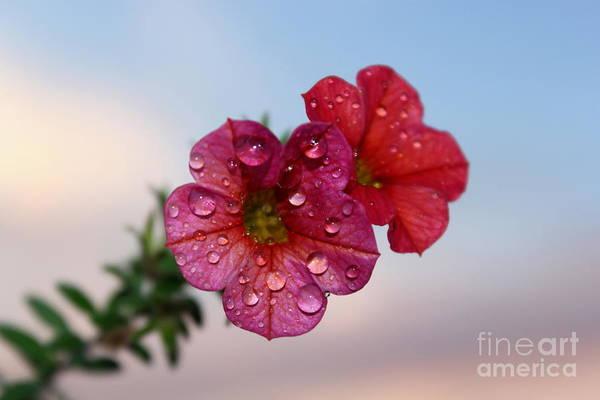 Petunias Photograph - Moving On by Krissy Katsimbras