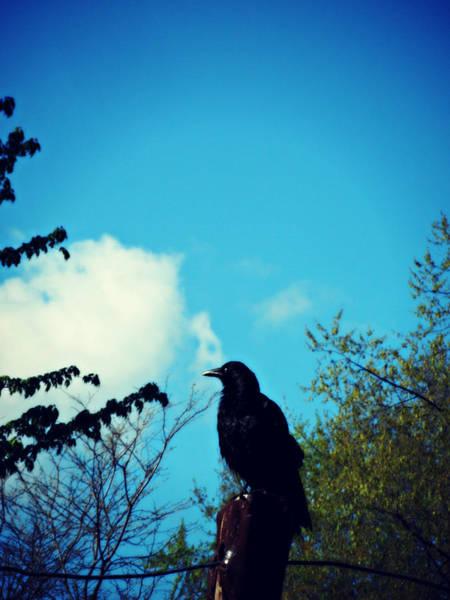 Photograph - Mr Black Bird by Cyryn Fyrcyd