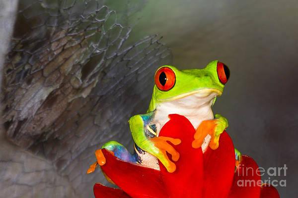 Photograph - Mr. Curious by Mary Lou Chmura