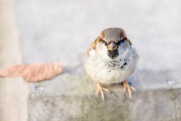 House Sparrow Photograph - Mr Eagle Jr by Alexander Senin