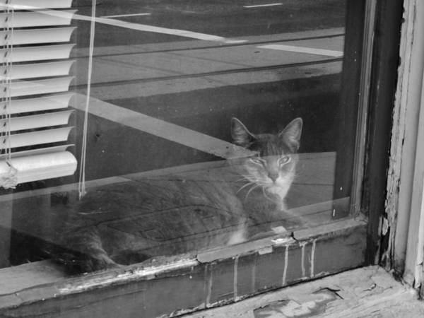 Photograph - Mr. Kitty Takes A Break by Charles Lucas