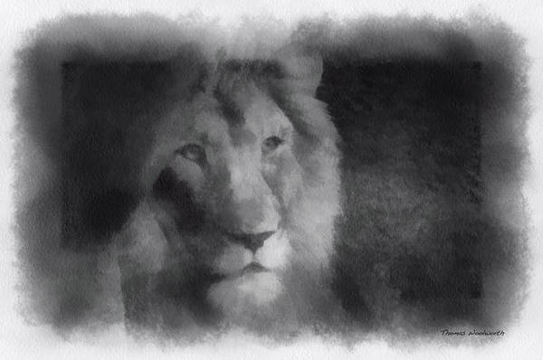 Wall Art - Photograph - Mr Lion Photo Art 01 by Thomas Woolworth