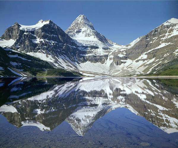 Photograph - 103451-mt. Assiniboine Reflect by Ed  Cooper Photography