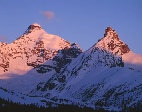 Photograph - 1m3738-mt. Athabasca And Hilda Peak by Ed  Cooper Photography