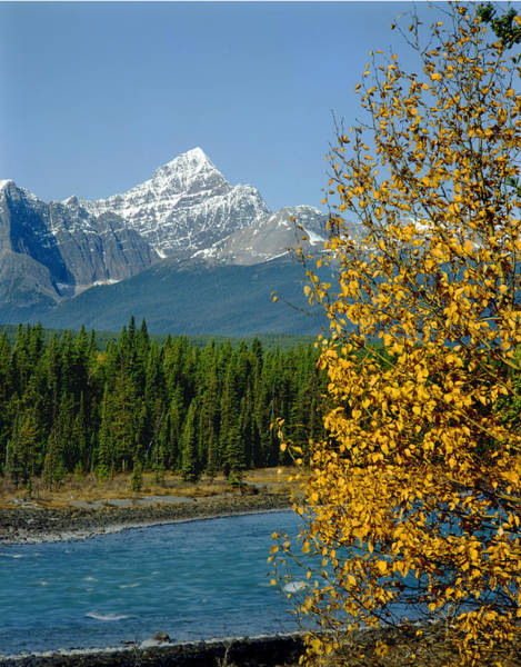 Photograph - 1m3829-mt. Edith Cavell In Autumn by Ed  Cooper Photography