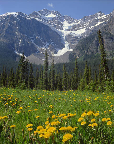 Photograph - 1m3613-mt. Patterson And The Snowbird Glacier by Ed  Cooper Photography