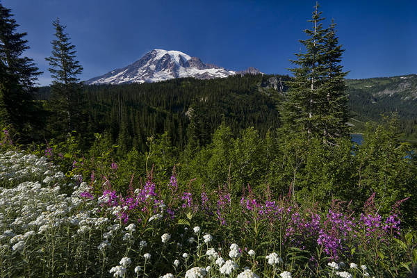 Photograph - Mt. Rainier by Adam Romanowicz