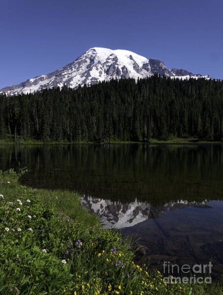 Photograph - Mt Rainier From Reflection Lake by Sharon Seaward