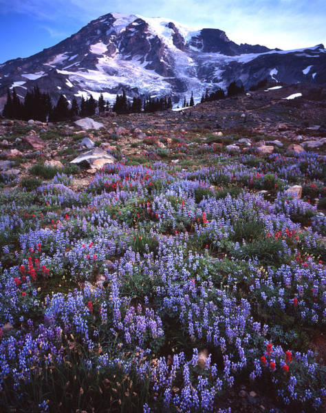 Photograph - Mt. Rainier Paradise by Ray Mathis