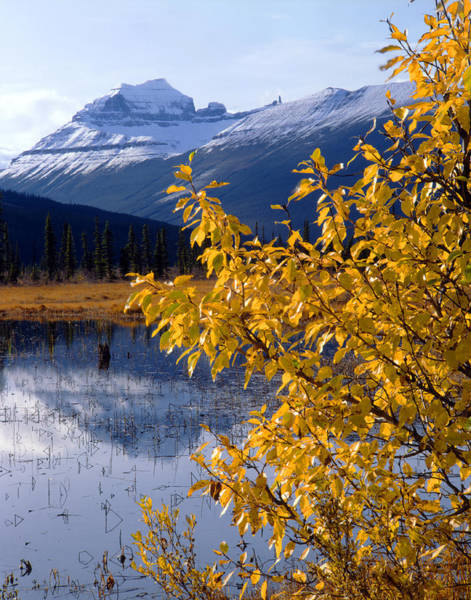 Photograph - 1m3626-mt. Saskatchewan In Fall by Ed  Cooper Photography