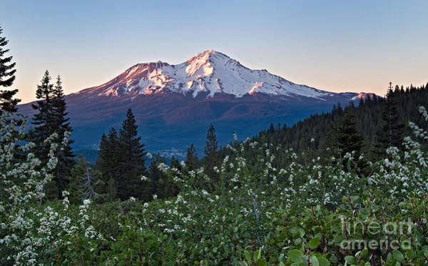 Photograph - Mt. Shasta At Dawn by Stuart Gordon