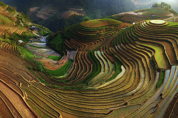 Rice Photograph - Mu Cang Chai - Vietnam by ??o T?n Ph?t