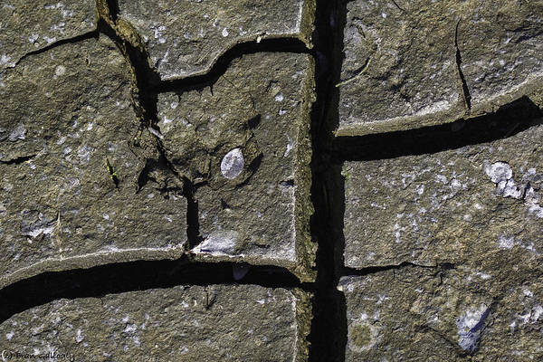 Pelican Island National Wildlife Refuge Wall Art - Photograph - Mud Abstraction by Fran Gallogly