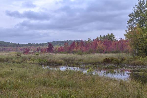 Photograph - Mud Pond Autumn II by Tom Singleton
