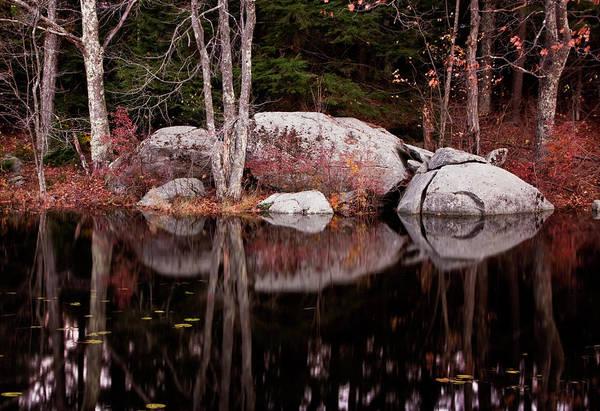 Photograph - Mud Pond Giant by Tom Singleton