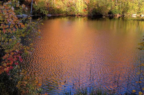 Photograph - Mud Pond by Tom Singleton