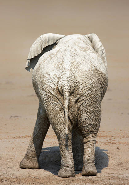 Unique Photograph - Muddy Elephant With Funny Stance  by Johan Swanepoel