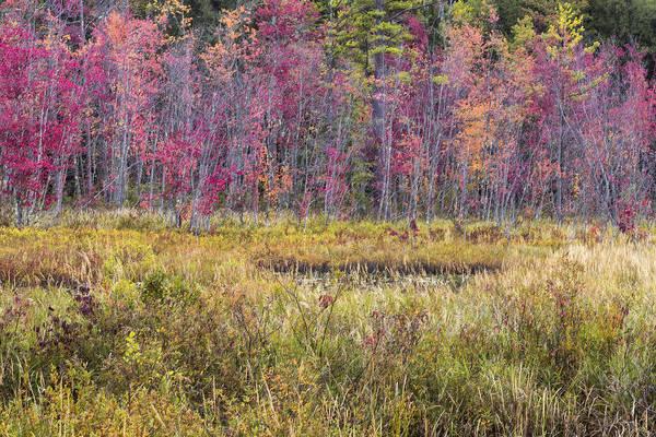 Photograph - Mud Pond Autumn by Tom Singleton