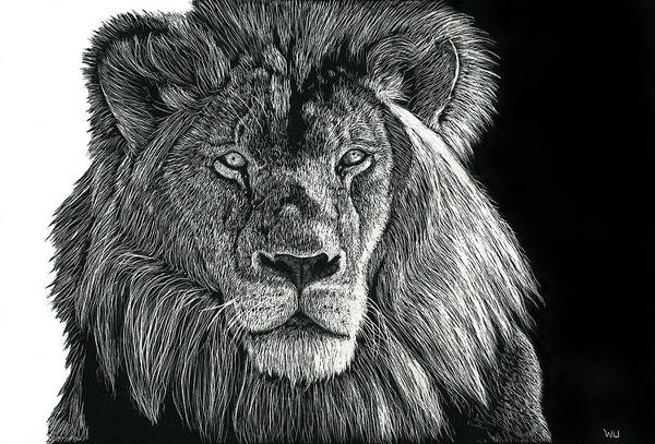 Drawing - Mufasa by William Underwood
