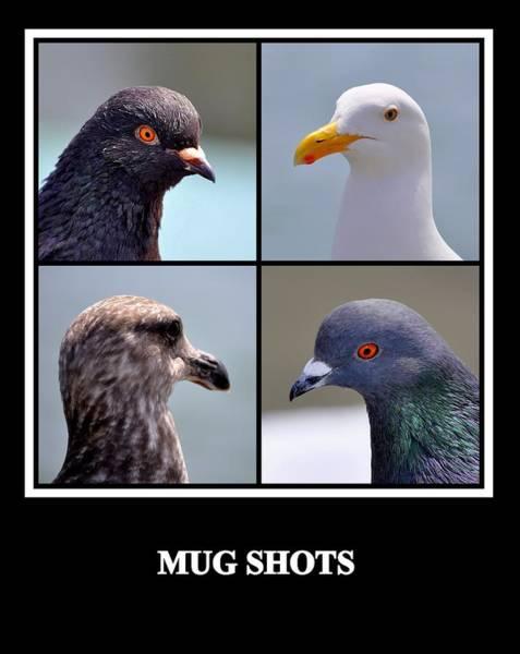 Photograph - Mug Shots by AJ  Schibig