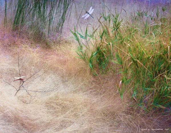 Muhlenberg Photograph - Muhly Grass Textures With Dragon Flies by R christopher Vest