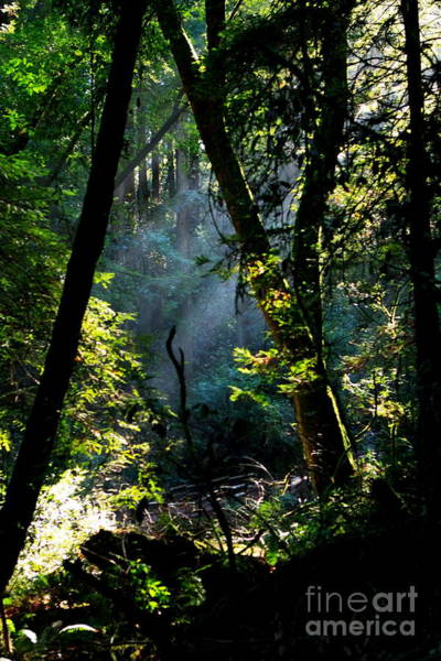 Photograph - Muir Woods by Aidan Moran