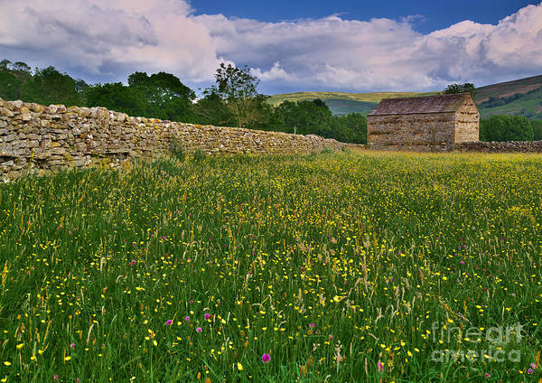 Photograph - Muker Wildflower Meadows by Martyn Arnold