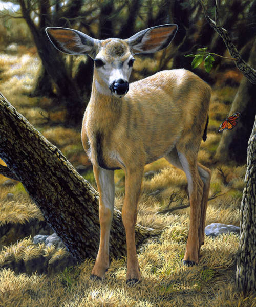 Mule Deer Wall Art - Painting - Mule Deer Fawn - Monarch Moment by Crista Forest