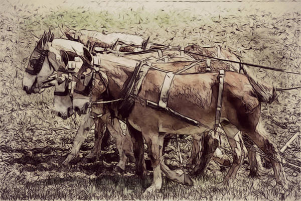 Photograph - Mule Team by Alice Gipson
