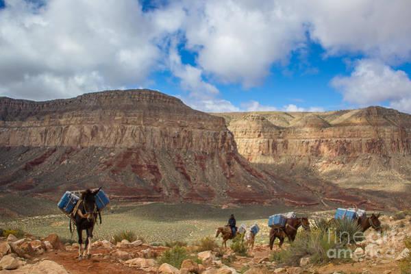 Photograph - Mule Train by Jim McCain