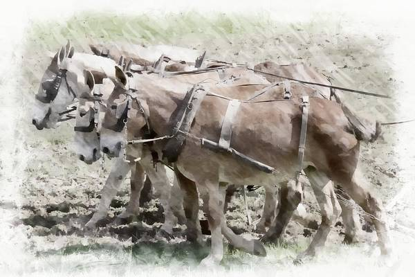 Photograph - Mules In A Row by Alice Gipson