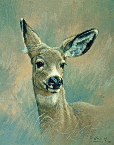 Deer Wall Art - Painting - Muley Fawn At Six Months by Paul Krapf