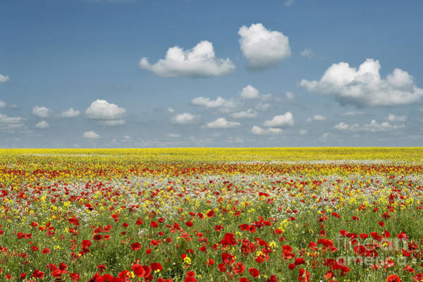 English Countryside Photograph - Multicoloured Field by Tim Gainey