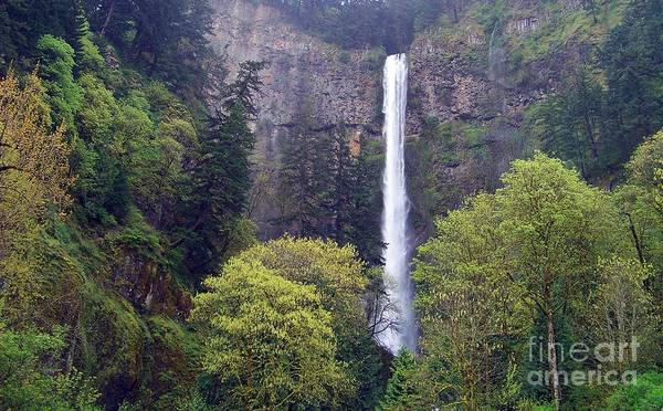 Photograph - Multnomah Falls In The Distance by Charles Robinson