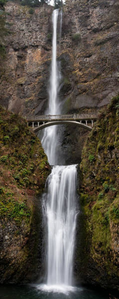 Photograph - Multnomah Tall by Brian Bonham