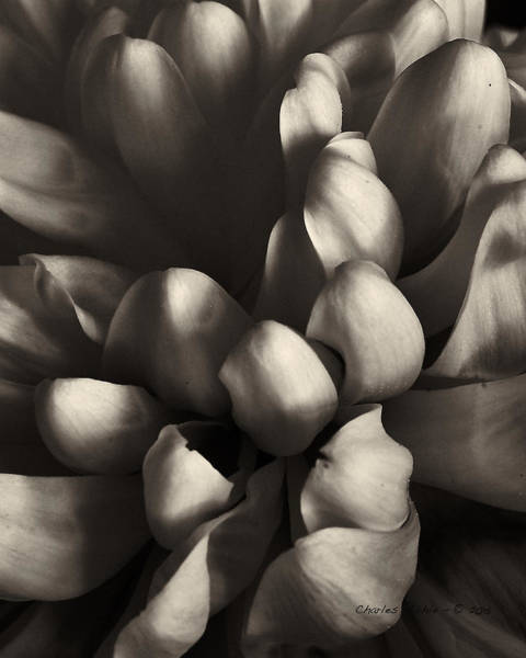Photograph - mum by Charles Muhle