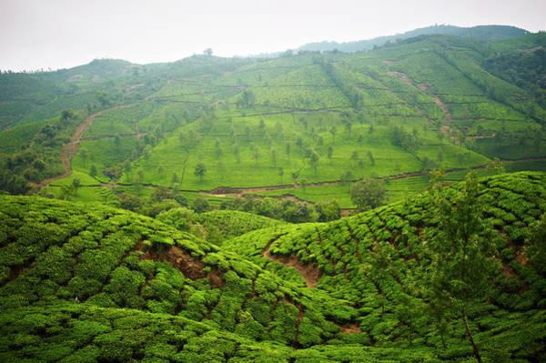 Kerala Photograph - Munna Tea Plantation Landscape by Matthew Leete