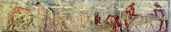 Hieroglyph Photograph - Mural Of Servants Stuffing A Hyena by Panoramic Images