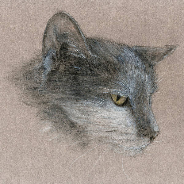 Drawing - Murray The Cat by Penny Collins