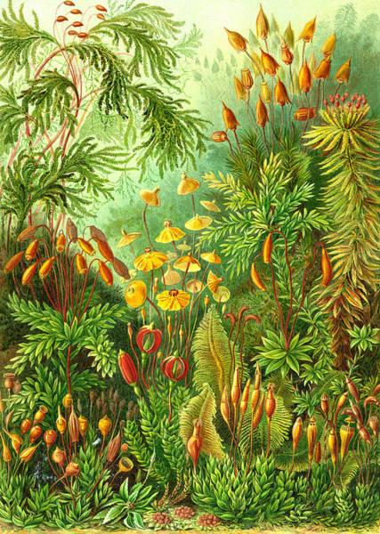 Muscinae Digital Art - Muscinae by Unknown