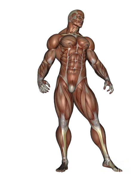 Muscle Tissue Digital Art - Muscular Man Standing by Elena Duvernay