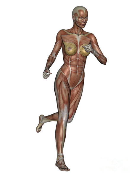 Muscle Tissue Digital Art - Muscular Woman Running by Elena Duvernay