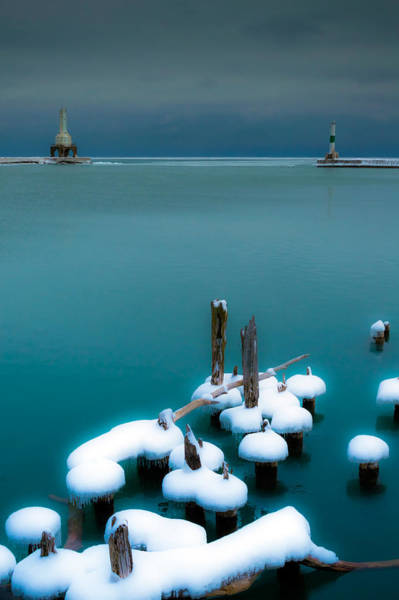 Photograph - Mushroom Caps by James  Meyer