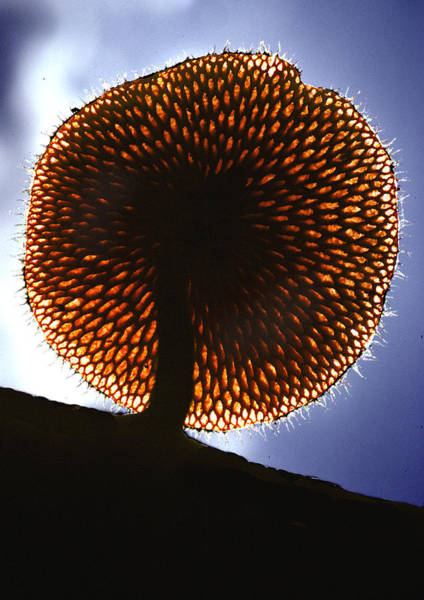 Wall Art - Digital Art - Mushroom by Fred Leavitt