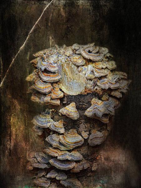 Surrealistic Photograph - Mushroom Goddess by Susan Capuano