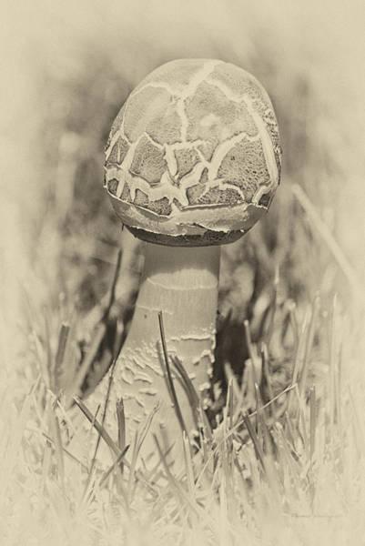 Wall Art - Photograph - Mushroom In Heirloom Finish by Thomas Woolworth