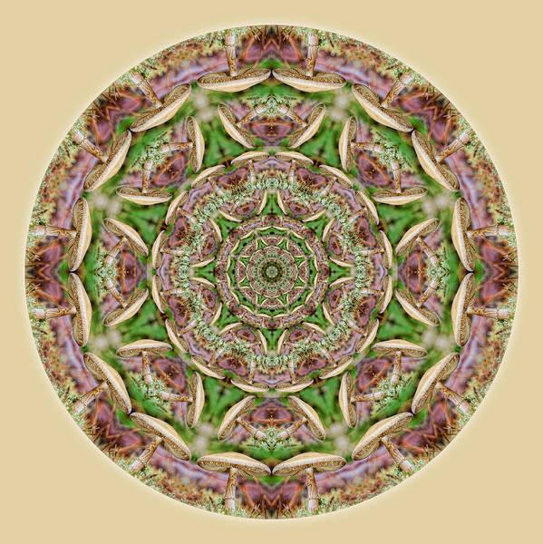 Digital Art - Mushroom Mandala 1 by Beth Sawickie
