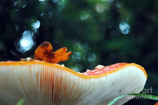Photograph - Mushroom by Rachael Shaw
